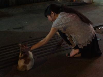 ベトナム猫との遭遇③
