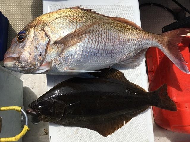 タイラバの釣果