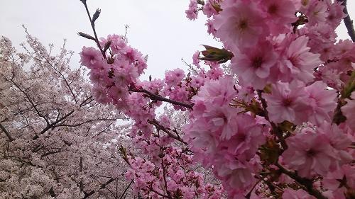 s-siroyama-03.jpg