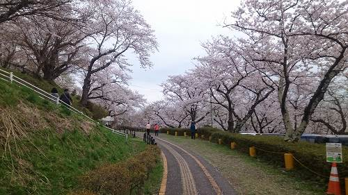 s-siroyama01.jpg