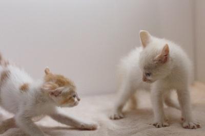 子猫の喧嘩