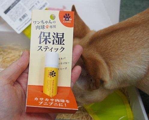 こいぬすてっぷ6