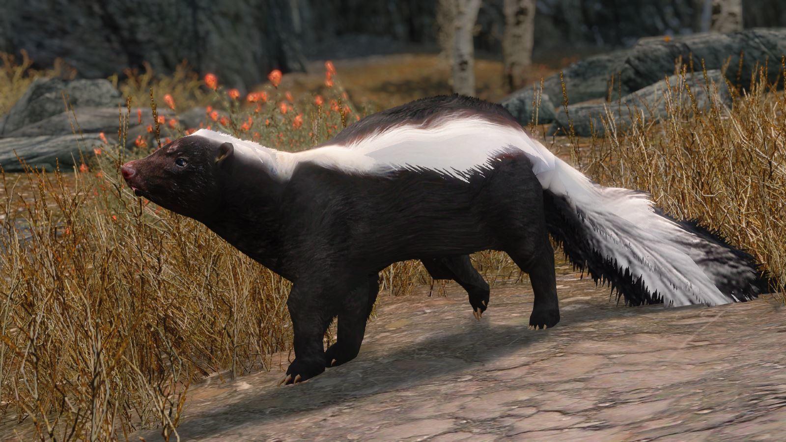 RacoonSkunkMihailSK 133-1 Pose StripedSkunk 1