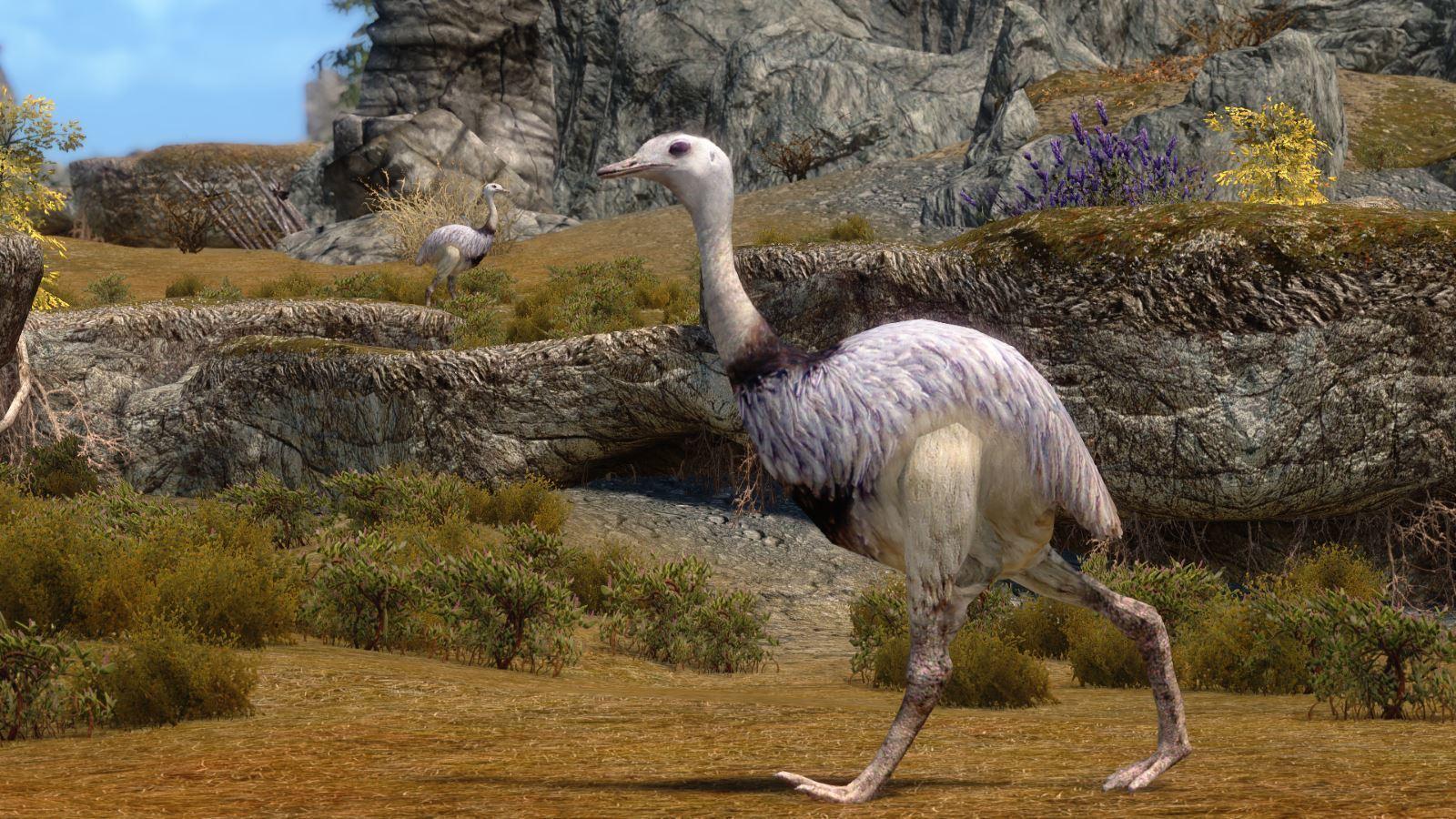 MoaEmuMihailSK 122 Info Emu 1