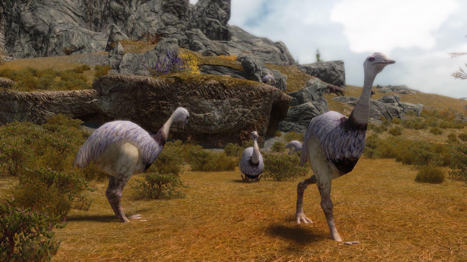 MoaEmuMihailSK 125-1 Info Emu 1