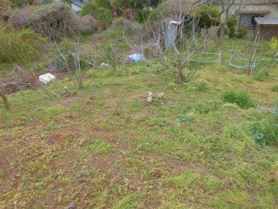 4.14イチジクエリアの草刈り