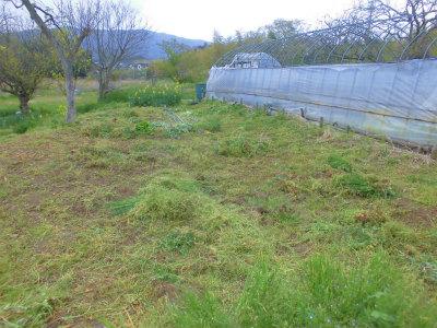 4.14ハウスの下の草刈り2