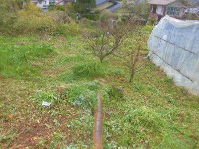 4.14ハウス裏の草刈り