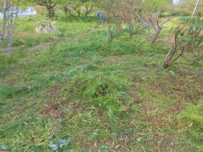 4.16草刈り2