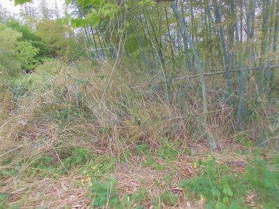 4.25荒れる竹薮