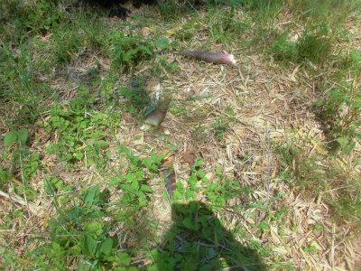 5.3小さい筍は捨てる