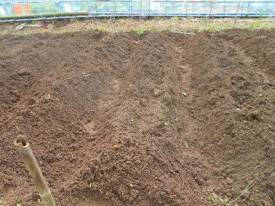 5.4里芋植え2