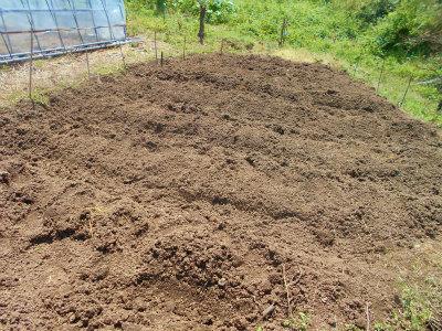 5.4里芋植え3
