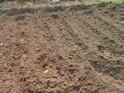 5.4里芋植え1