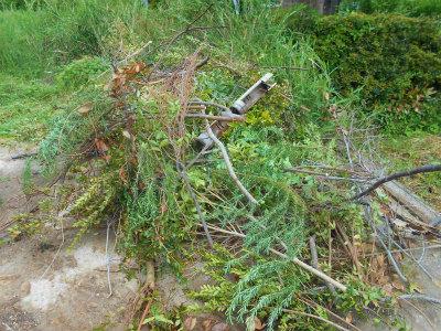 5.8庭木の処分