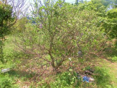5.14柑橘の被害4