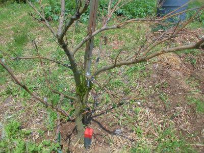 5.14柑橘の被害2