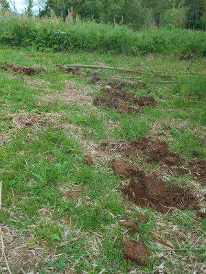 5.20瓢簞カボチャの穴掘り2