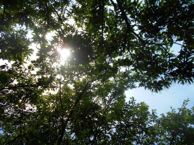 5.22木漏れ日
