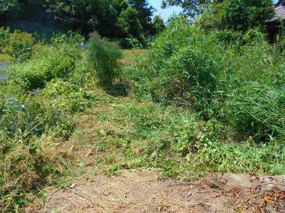 6.2空地の草刈り2