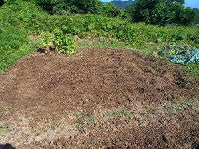 6.16そら豆の後の耕耘