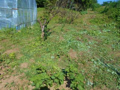 6.16ハウスの後ろの草刈り