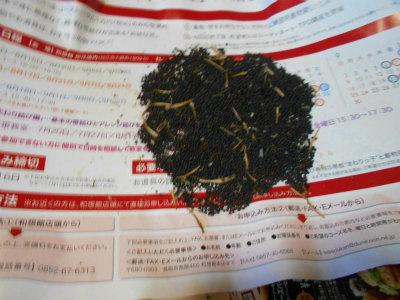 6.24のらぼう菜採種