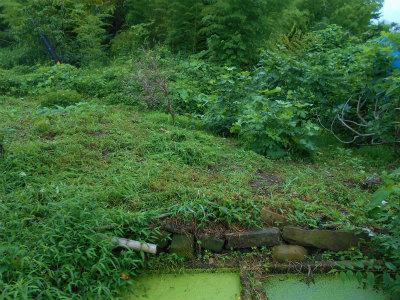 7.7草刈り1
