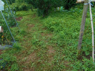 7.7草刈り7