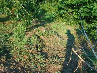 7.16早朝の草刈り2