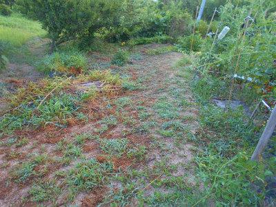 7.21草刈り後3