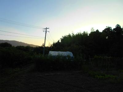 7.21まだ薄暗い畑