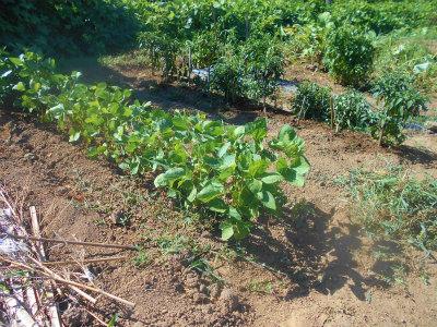 7.30畝間の草削り