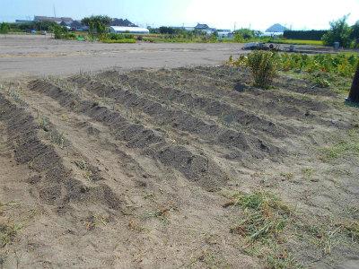 8.4草取り、追肥。土寄せ