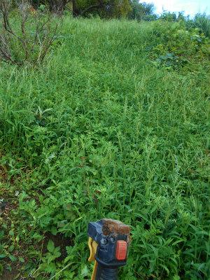 9.16草刈り1