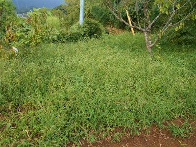 9.16草刈り5