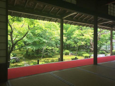 圓光寺・本堂から十牛の庭_H29.6.28撮影