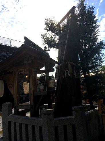 地主神社・のろいの杉_H29.11.03撮影