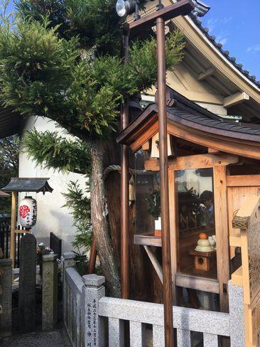 地主神社・のろい杉_H29.11.03撮影
