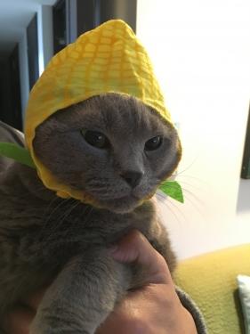幸運を運ぶ猫🐱バーマン − メロウちゃん −
