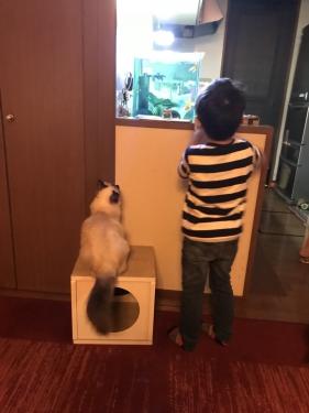 幸運を運ぶバーマン子猫🐱🐾シリウスくん