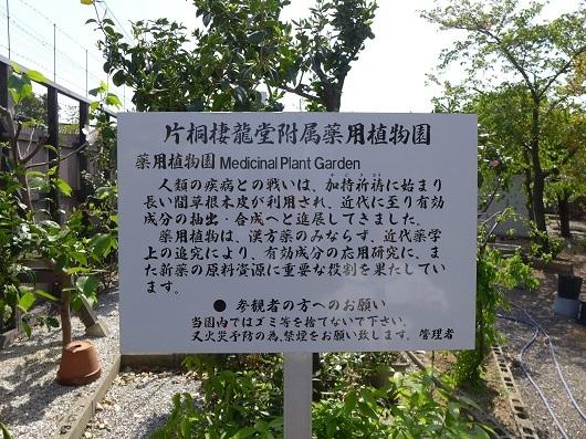 片桐棲龍堂 (5)