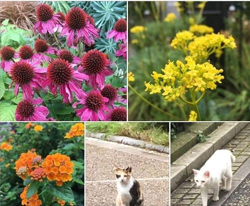 元気の花と猫