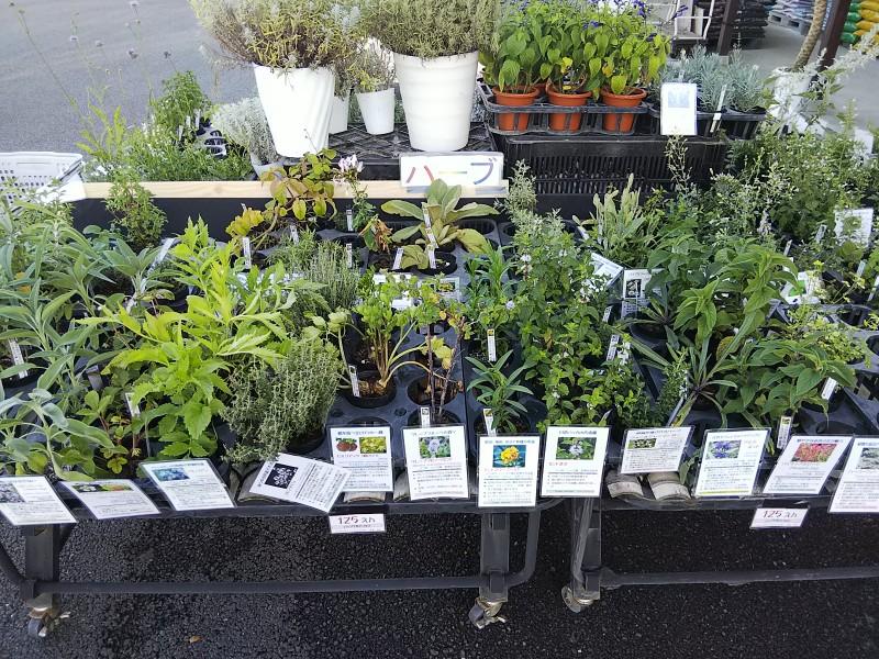 緑花木市場ハーブ2018