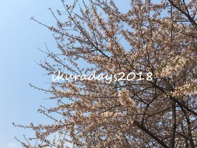 20180426_桜
