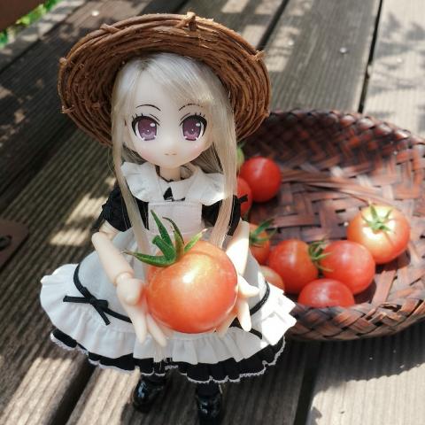 2018-07-26-ヴェル&トマト