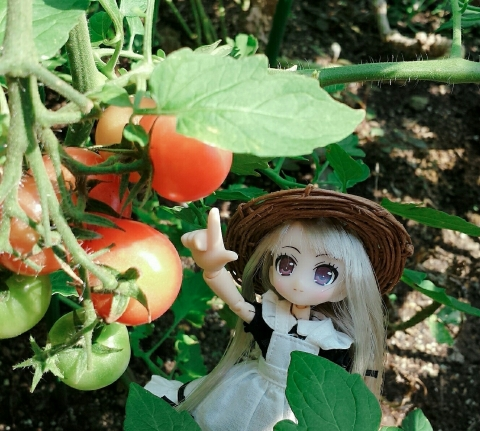 20180726_トマト発見①