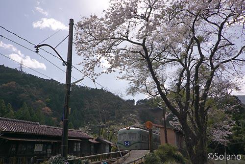 青部駅、南海の古豪電車、木造駅舎、そして桜…