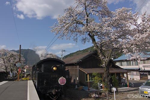 駿河徳山駅、桜と新金谷行きのSL列車が通過