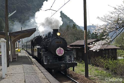 大井川鉄道・田野口駅を通過する「さくら」のヘッドマークを付けたSL